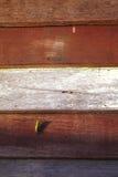 Grasshopper on wood Royalty Free Stock Photos