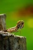 Grasshoppers άποψης εγκιβωτισμός στοκ φωτογραφίες