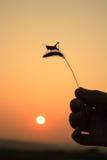 Grasshoppers και αλωπεκούρος Στοκ Φωτογραφίες