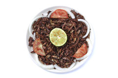 Grasshoppers stock image