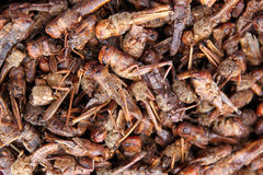 Grasshoppers on sale Royalty Free Stock Photos