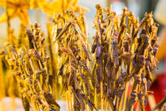Grasshoppers on skewers cooked for food Stock Photo
