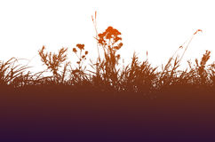 Grassilhouet op een witte achtergrond Stock Afbeeldingen