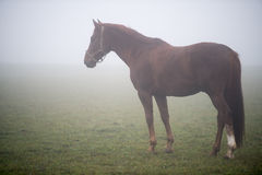 A grassing horse Stock Photography