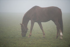 A grassing horse Royalty Free Stock Photography