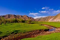 Grassland,tree and mountain Stock Photo