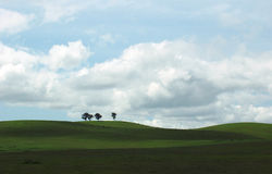 Grassland. Four trees on green grassland Royalty Free Stock Images