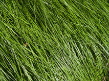 Grassland Stock Photos