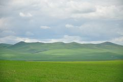 Grassland. Beautiful grassland in Hulunbuir  China Royalty Free Stock Photos
