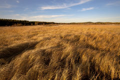 Grassland. Autumn grassland under the blue sky and white clouds Royalty Free Stock Photography