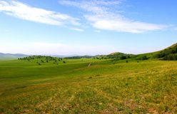 Grassland Stock Photography