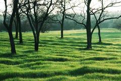 Grassland Stock Image