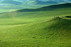 Grassland. Some people in the grassland Stock Photography