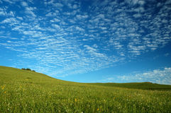 Grassland. The grassland with blue skies Royalty Free Stock Image