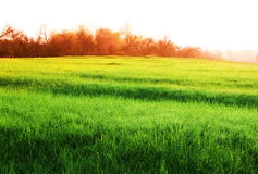 Grassland Royalty Free Stock Image