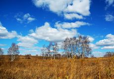 Grassland. Beautiful under the blue sky and white cloud Royalty Free Stock Photography