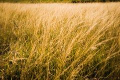 grassland Obraz Royalty Free
