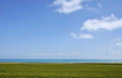 grassland imagem de stock