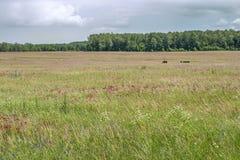 grassland Imagens de Stock Royalty Free