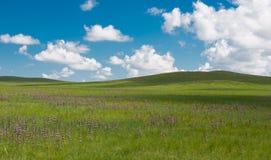Free Grassland Royalty Free Stock Photos - 55843558