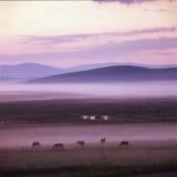 Grassland. Sun rise on  grassland , Bashang Stock Photography