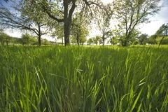 Grassland. In the summertime Stock Image