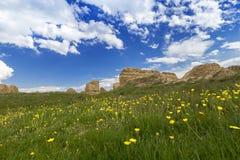grassland Zdjęcie Stock