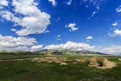 grassland Zdjęcia Stock