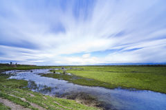 grassland Foto de Stock Royalty Free
