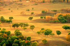 Grassland. Chinese grasslands of Inner Mongolia in the fall of the forest Royalty Free Stock Photography