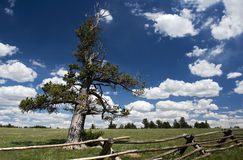 Grassland. Pasture in Wyoming under a beautiful sky Stock Photos