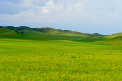 Grassland. In the summer morning royalty free stock photo
