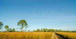 grassland Fotografia de Stock Royalty Free