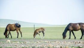 Free Grassland Stock Photo - 96004280