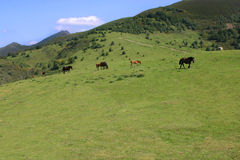 Grassland in Asturias with horse. In the San Lorenzo mountain pass, in Asturias, some horses are eating grass Stock Images