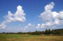 Grassland in autumn Royalty Free Stock Photo