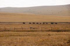 Grassland autumn scenery in China. The hulunbuir prairie autumn scenery of China Royalty Free Stock Photo
