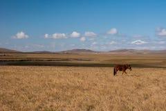 Grassland autumn scenery in China. The hulunbuir prairie autumn scenery of China Stock Photos