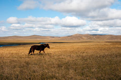 Grassland autumn scenery in China. The hulunbuir prairie autumn scenery of China Royalty Free Stock Image