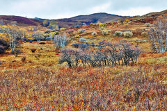 Grassland autumnal colors Royalty Free Stock Image