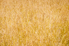 Grassland background Royalty Free Stock Photos