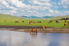 Grassland Royalty Free Stock Photos