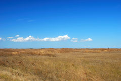 Grassland and blue sky Stock Image