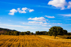 Grassland. With the blue sky Royalty Free Stock Photo