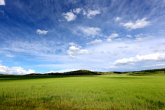 Grassland and blue sky 2. In the grassland on the land of wild flowers, blue sky, white clouds, beautiful. In this world, I feel especially comfortable Stock Images
