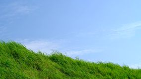Grassland with blue sky in summer season, background material. stock video