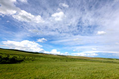 Grassland and blue syk 3 Royalty Free Stock Photography
