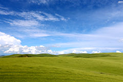 Grassland and blue syk 4. In the grassland on the land of wild flowers, blue sky, white clouds, beautiful. In this world, I feel especially comfortable Royalty Free Stock Photography