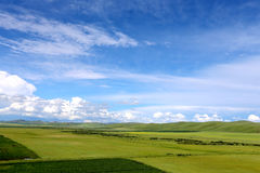 Grassland and blue syk 5. In the grassland on the land of wild flowers, blue sky, white clouds, beautiful. In this world, I feel especially comfortable Royalty Free Stock Image