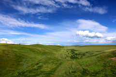 Grassland and blue syk 6. In the grassland on the land of wild flowers, blue sky, white clouds, beautiful. In this world, I feel especially comfortable Stock Photography